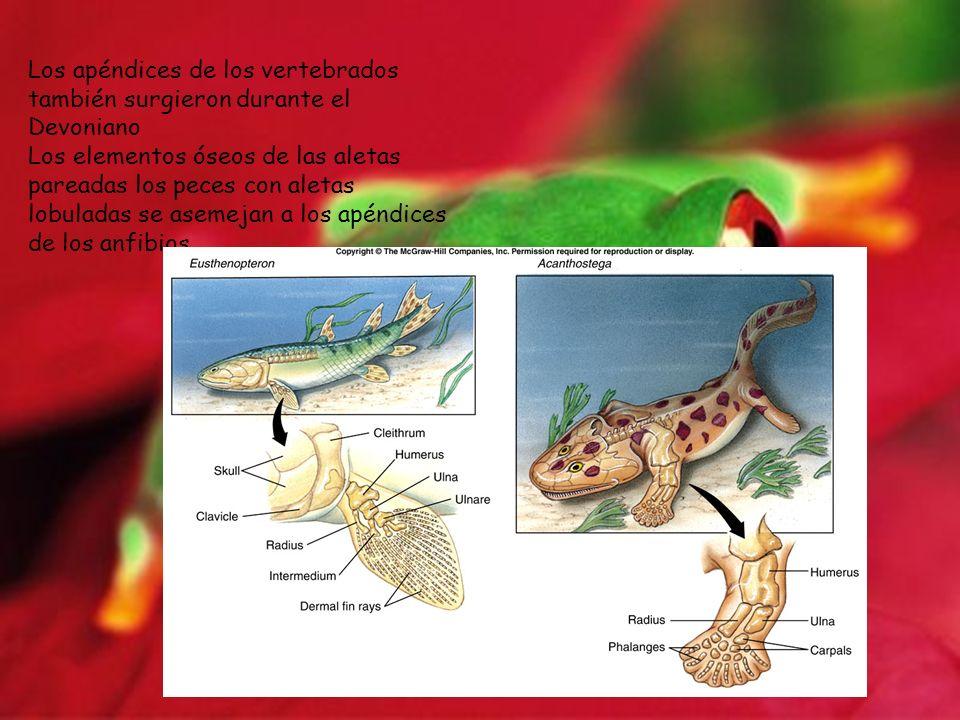 Los apéndices de los vertebrados también surgieron durante el Devoniano