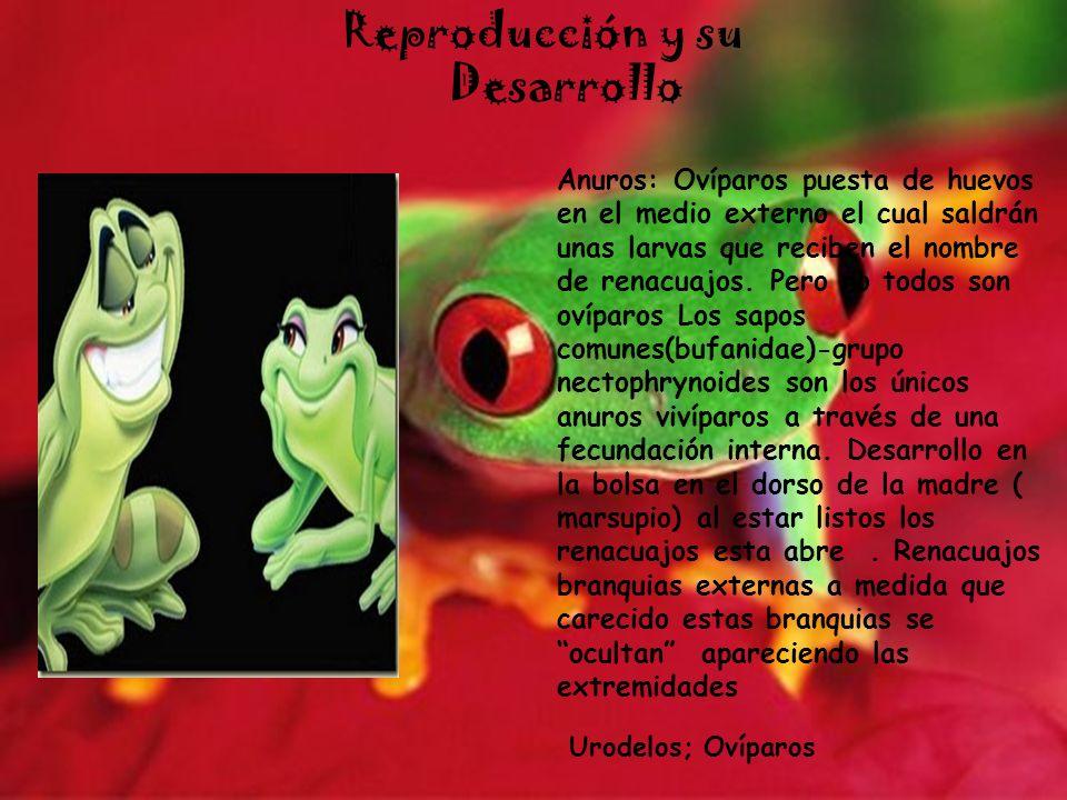 Reproducción y su Desarrollo