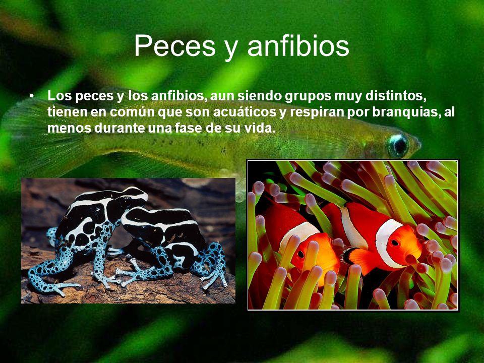 Peces y anfibios