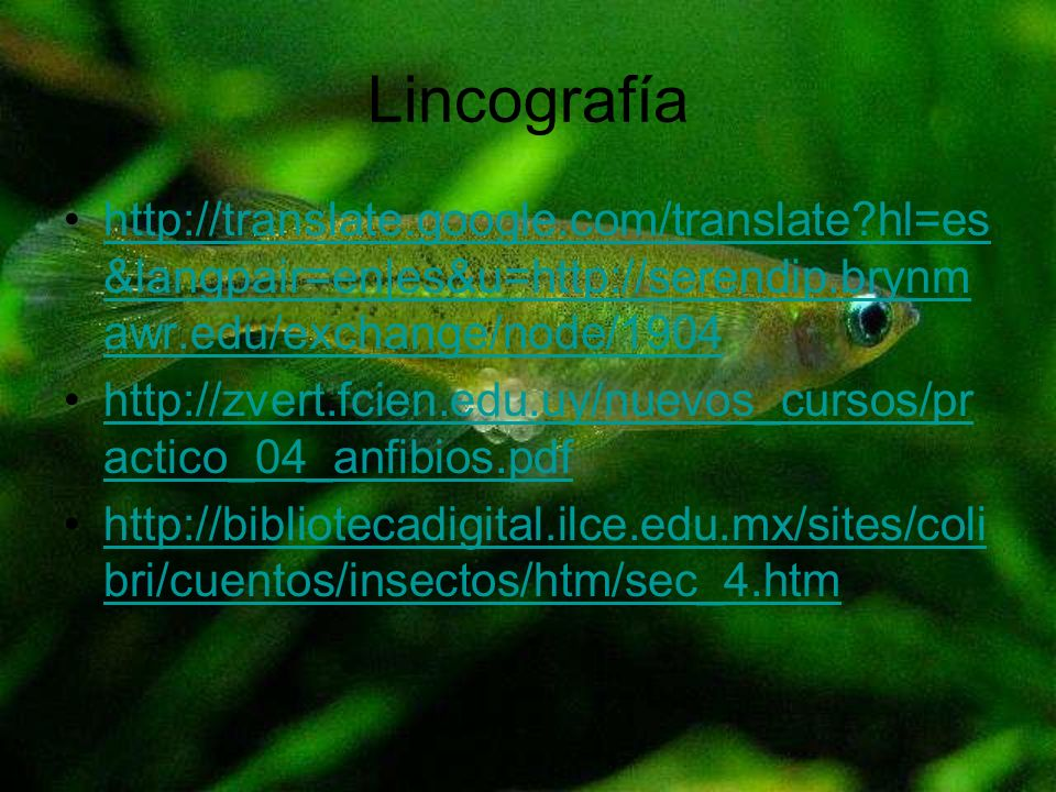 Lincografía http://translate.google.com/translate hl=es&langpair=en|es&u=http://serendip.brynmawr.edu/exchange/node/1904.
