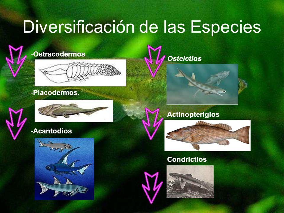 Diversificación de las Especies