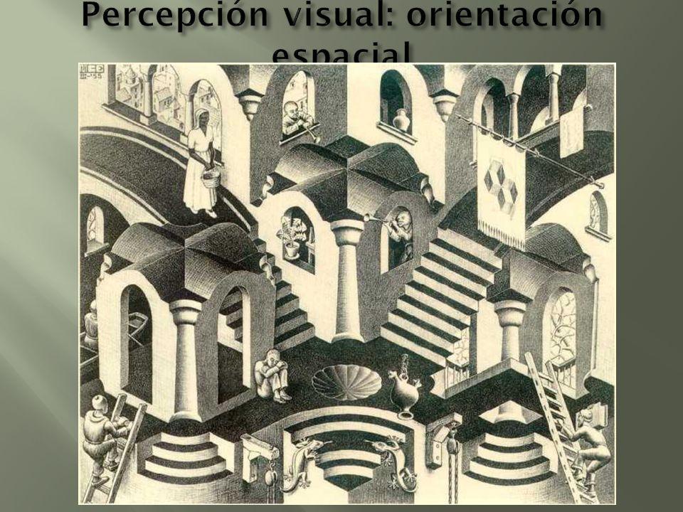 Percepción visual: orientación espacial