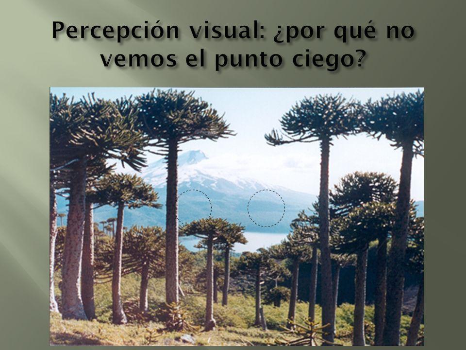 Percepción visual: ¿por qué no vemos el punto ciego
