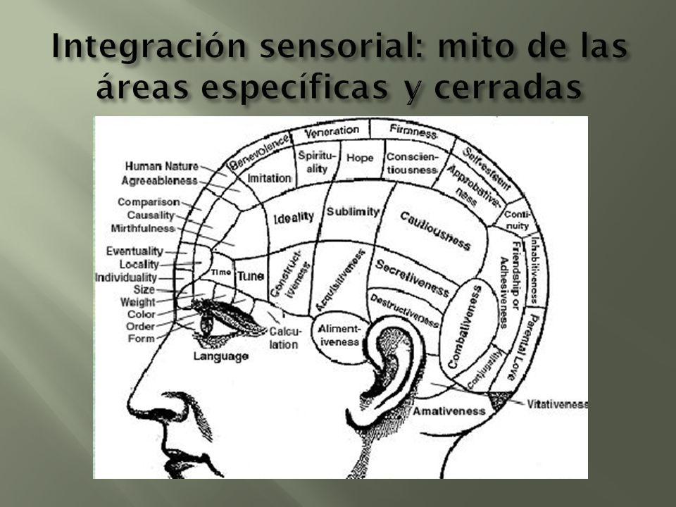 Integración sensorial: mito de las áreas específicas y cerradas