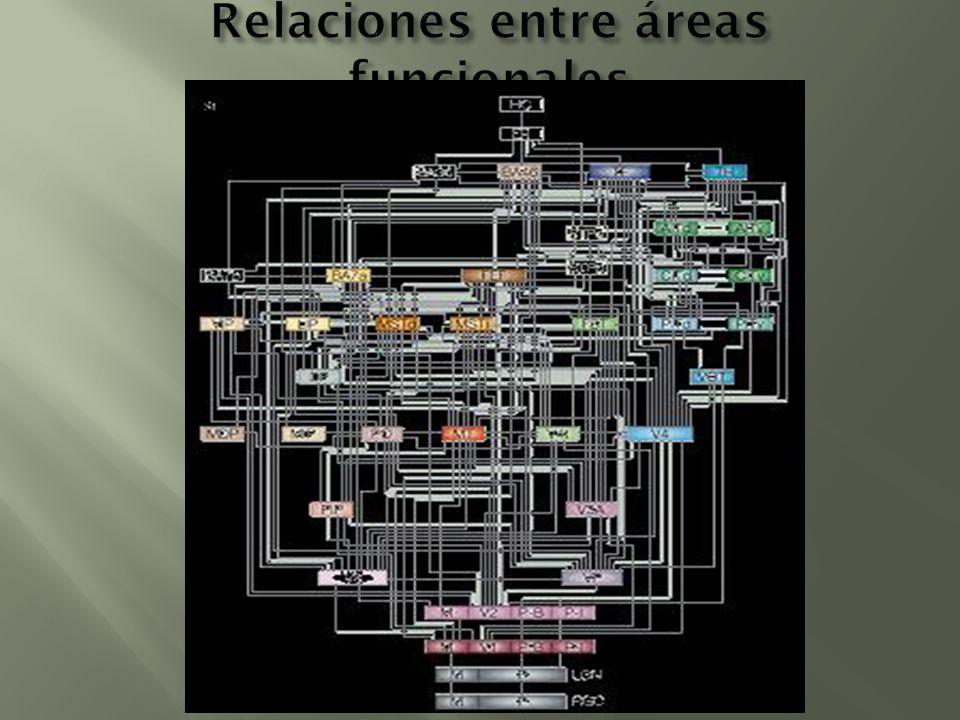 Relaciones entre áreas funcionales