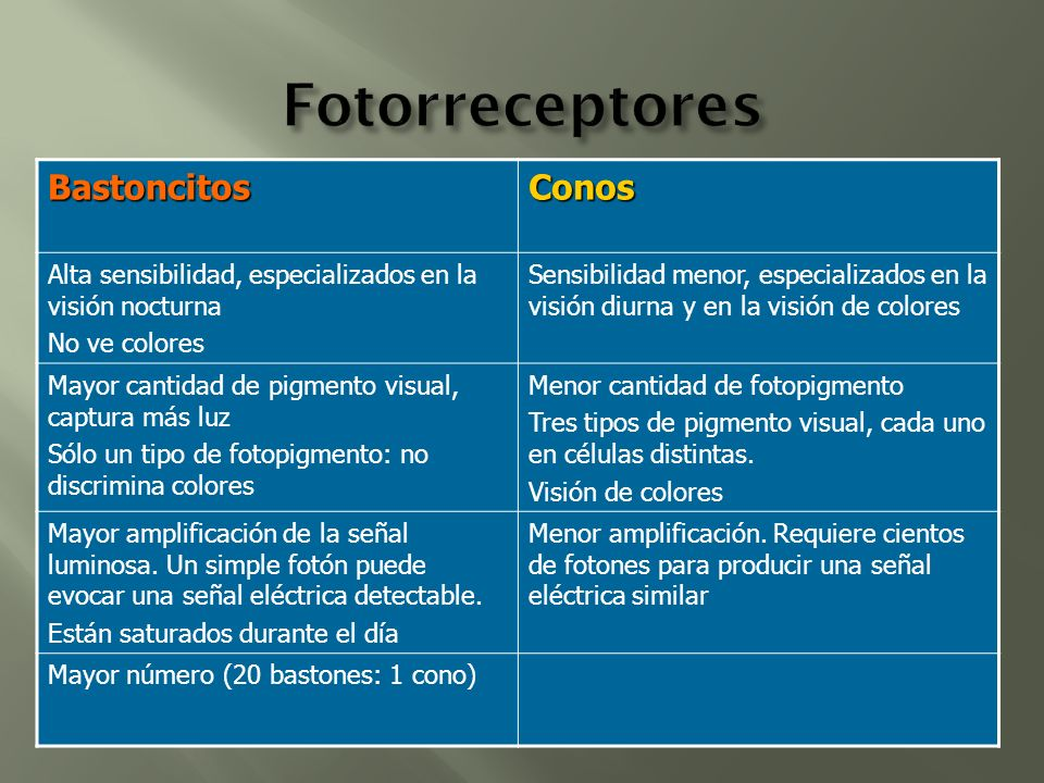 Fotorreceptores Bastoncitos Conos