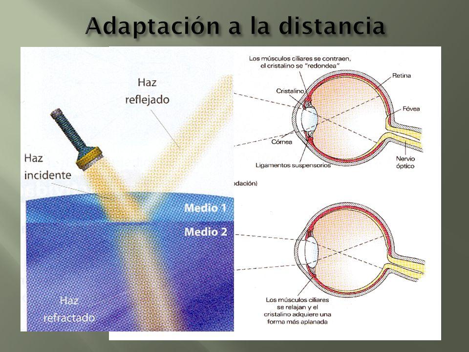 Adaptación a la distancia