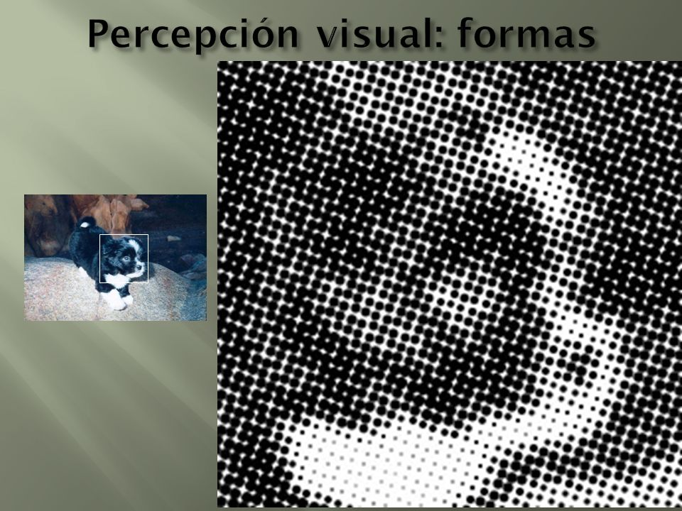 Percepción visual: formas