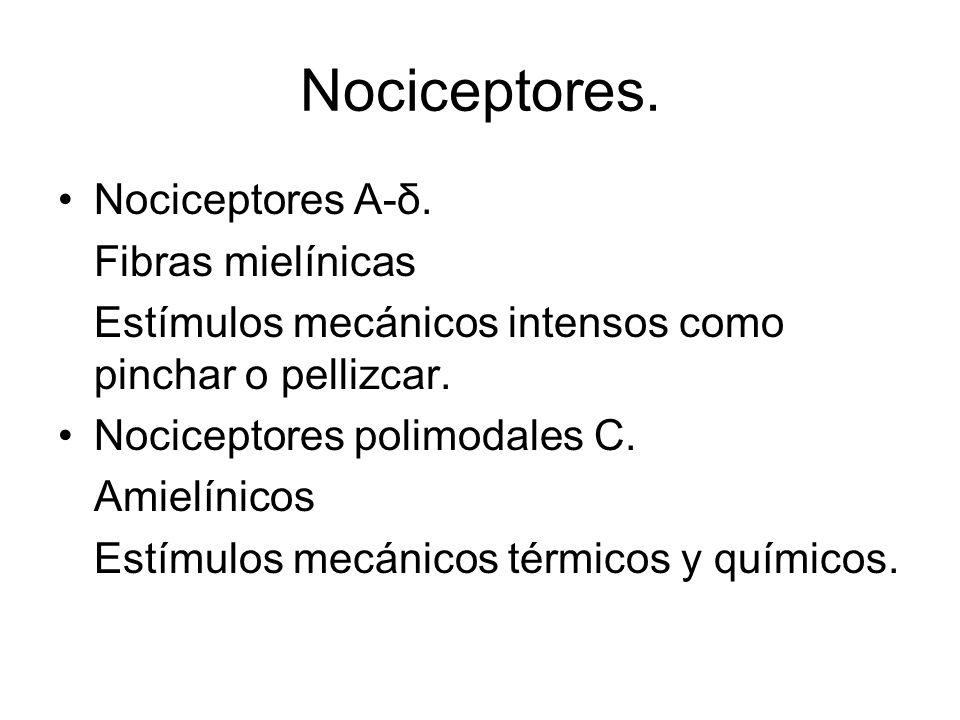 Nociceptores. Nociceptores A-δ. Fibras mielínicas
