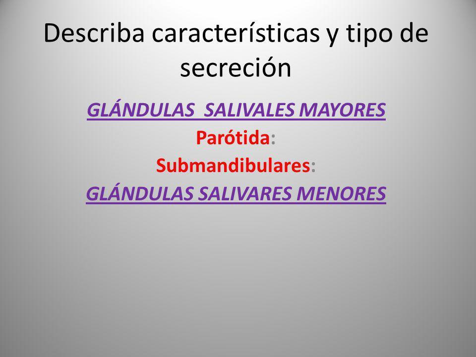 Describa características y tipo de secreción