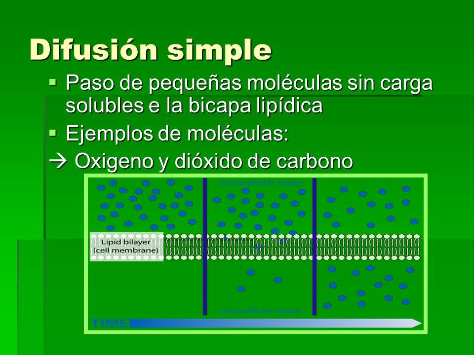 Difusión simple Paso de pequeñas moléculas sin carga solubles e la bicapa lipídica. Ejemplos de moléculas: