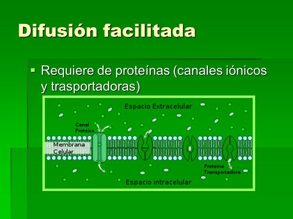 Difusión facilitada Requiere de proteínas (canales iónicos y trasportadoras)