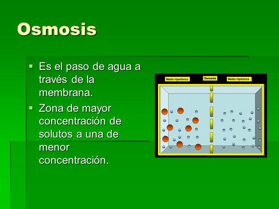 Osmosis Es el paso de agua a través de la membrana.