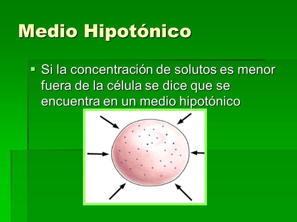 Medio HipotónicoSi la concentración de solutos es menor fuera de la célula se dice que se encuentra en un medio hipotónico.