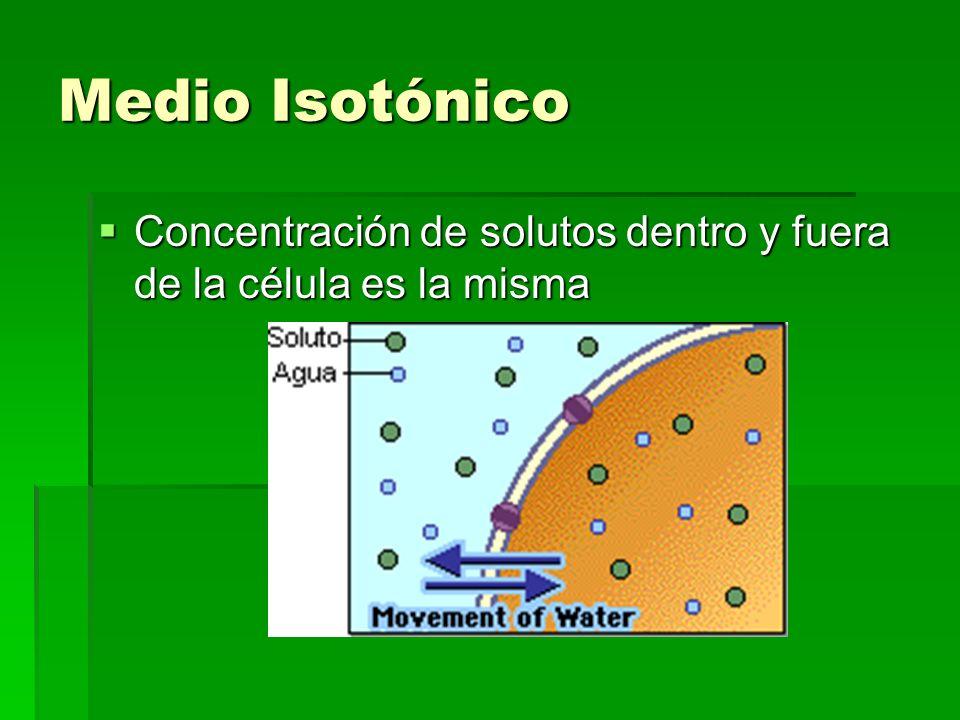 Medio Isotónico Concentración de solutos dentro y fuera de la célula es la misma
