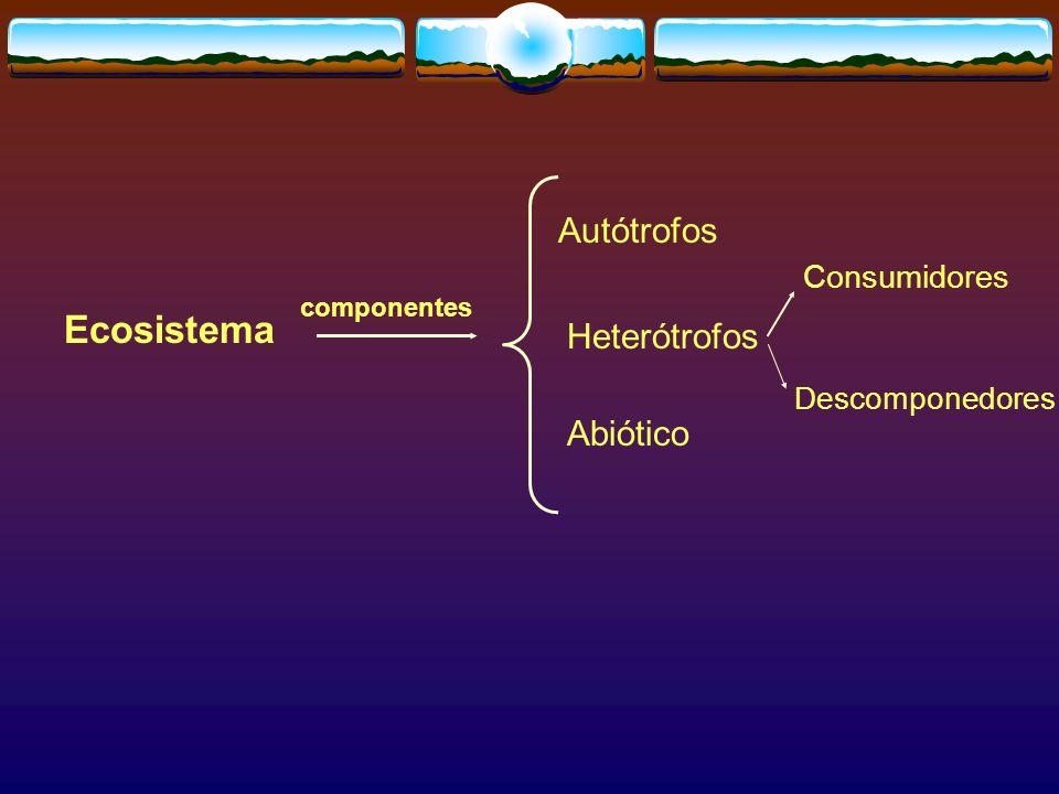 Ecosistema Autótrofos Heterótrofos Abiótico Consumidores
