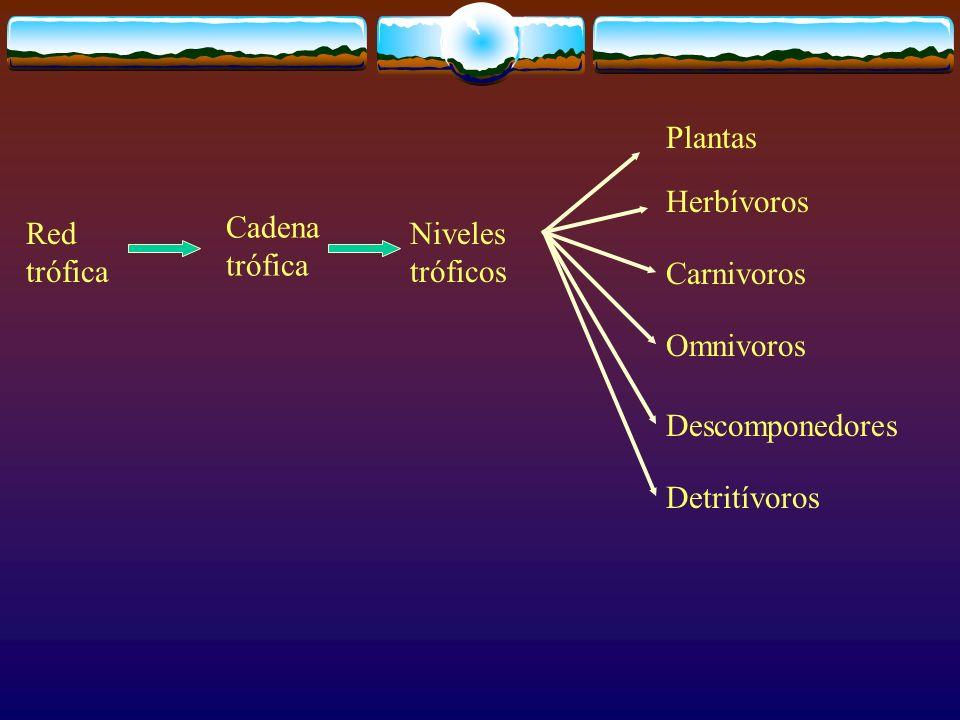 Plantas Herbívoros. Cadena trófica. Red trófica. Niveles tróficos. Carnivoros. Omnivoros. Descomponedores.