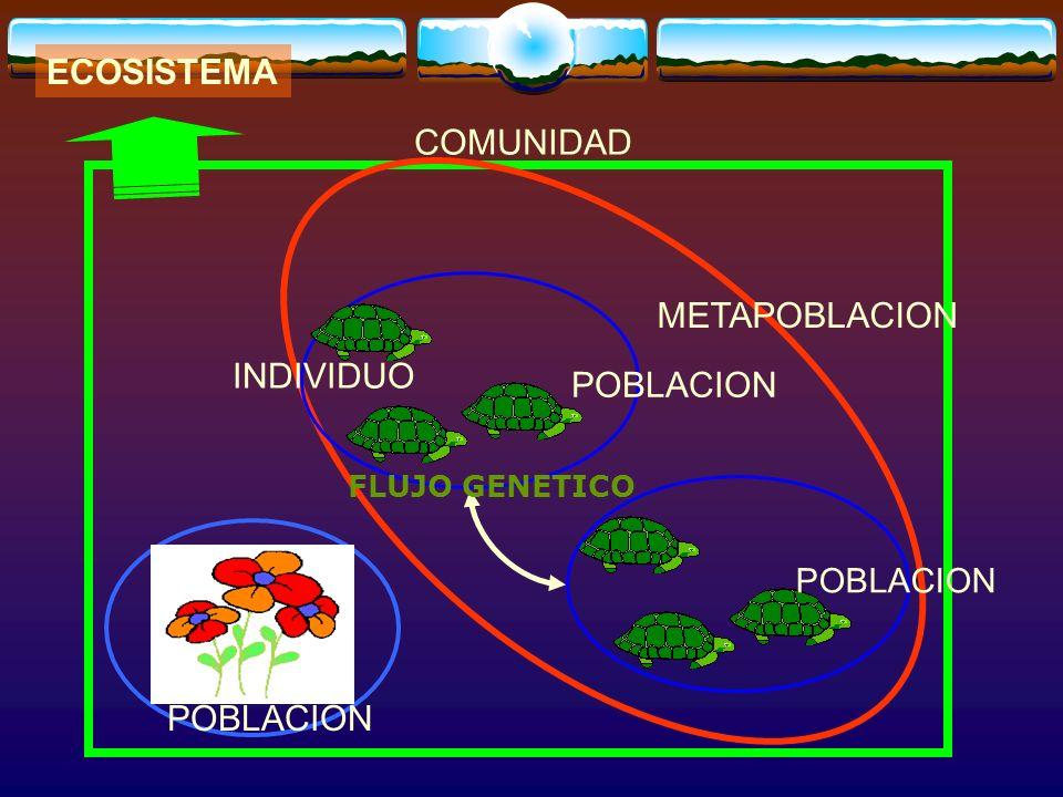 ECOSISTEMA COMUNIDAD METAPOBLACION INDIVIDUO POBLACION POBLACION