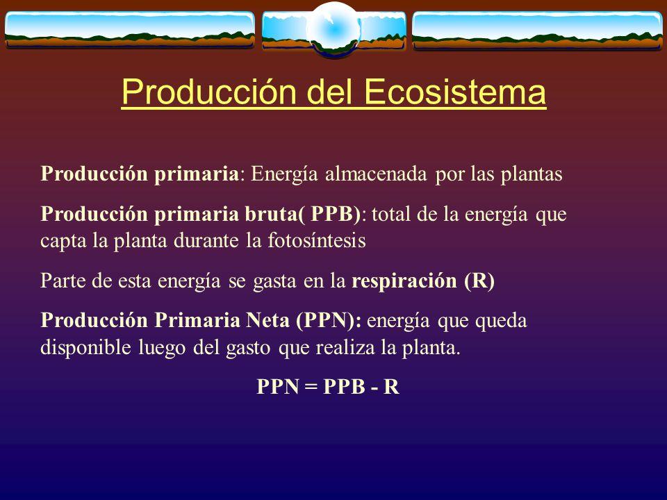 Producción del Ecosistema