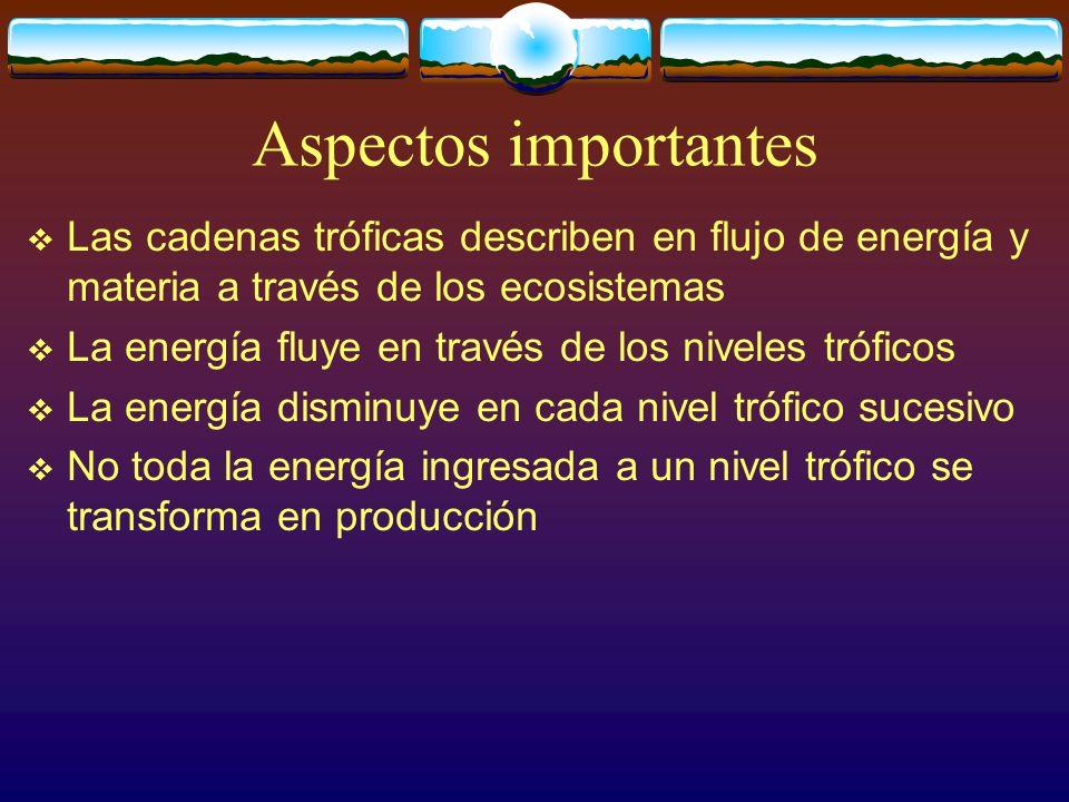 Aspectos importantes Las cadenas tróficas describen en flujo de energía y materia a través de los ecosistemas.