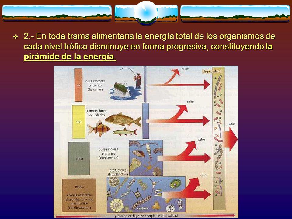 2.- En toda trama alimentaria la energía total de los organismos de cada nivel trófico disminuye en forma progresiva, constituyendo la pirámide de la energía.