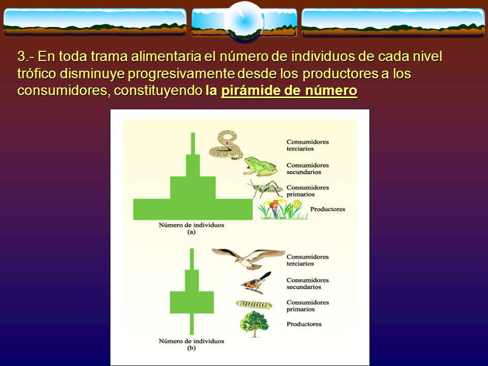 3.- En toda trama alimentaria el número de individuos de cada nivel trófico disminuye progresivamente desde los productores a los consumidores, constituyendo la pirámide de número