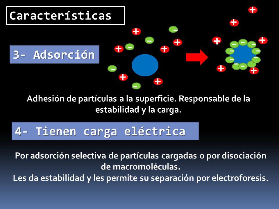 Les da estabilidad y les permite su separación por electroforesis.