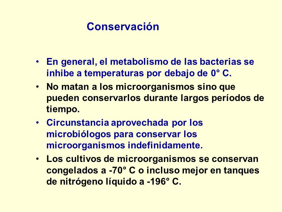 Conservación En general, el metabolismo de las bacterias se inhibe a temperaturas por debajo de 0° C.