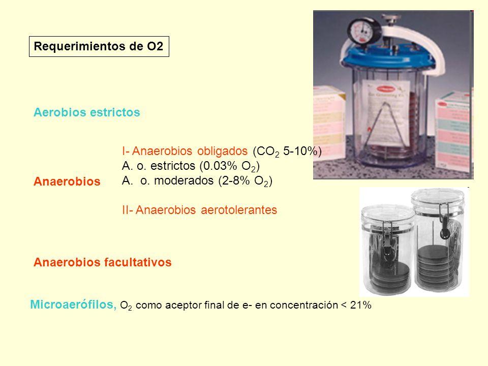 Requerimientos de O2 Aerobios estrictos. I- Anaerobios obligados (CO2 5-10%) A. o. estrictos (0.03% O2)