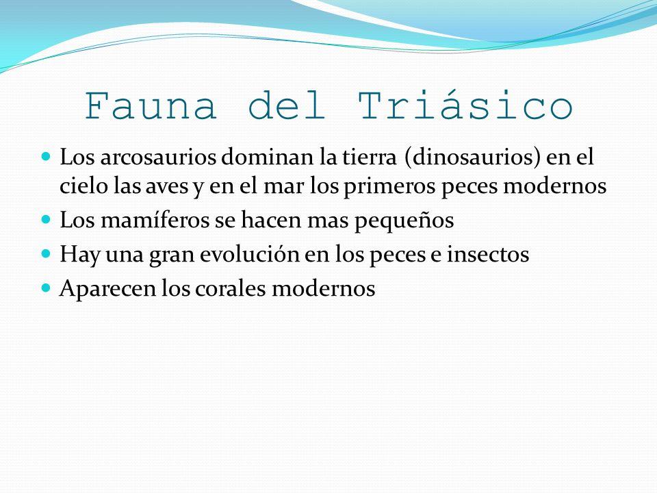 Fauna del Triásico Los arcosaurios dominan la tierra (dinosaurios) en el cielo las aves y en el mar los primeros peces modernos.