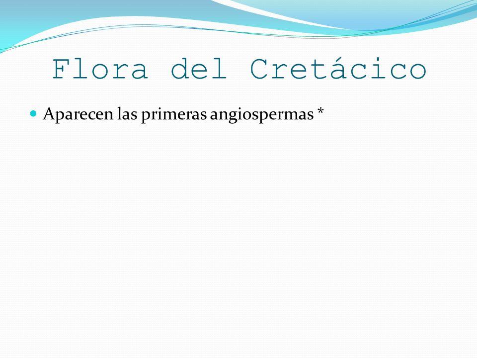 Flora del Cretácico Aparecen las primeras angiospermas *