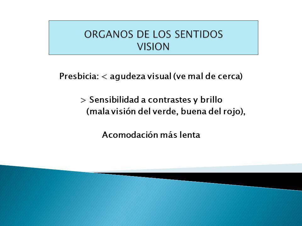 ORGANOS DE LOS SENTIDOS VISION