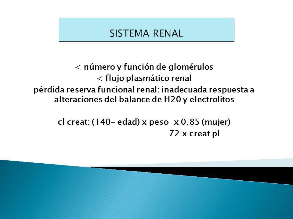 SISTEMA RENAL < número y función de glomérulos