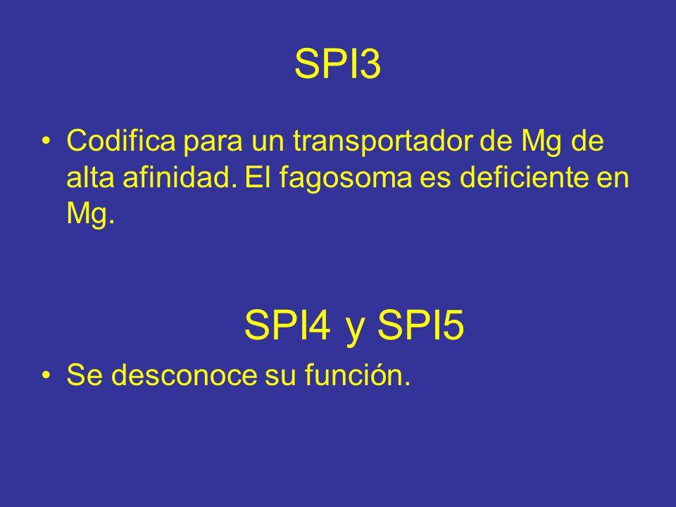 SPI3 Codifica para un transportador de Mg de alta afinidad. El fagosoma es deficiente en Mg. SPI4 y SPI5.