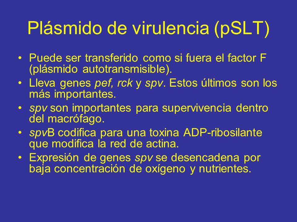 Plásmido de virulencia (pSLT)