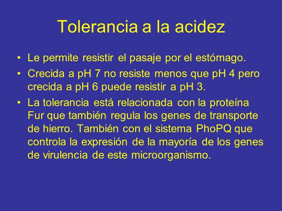 Tolerancia a la acidez Le permite resistir el pasaje por el estómago.