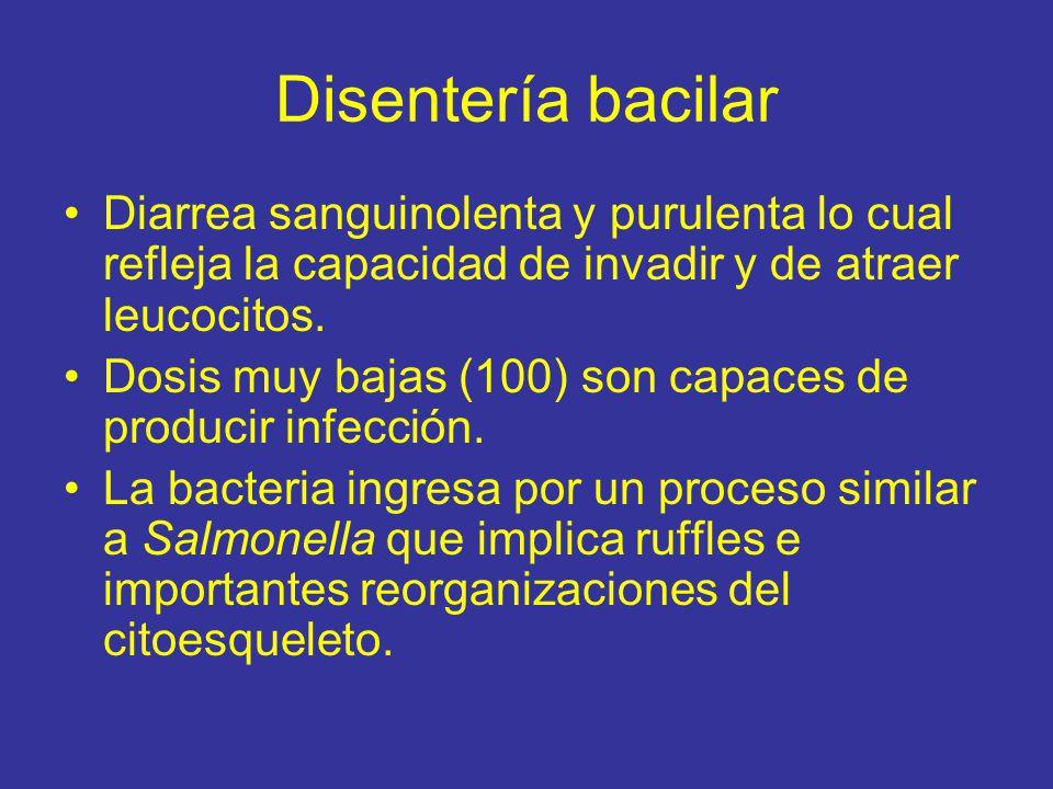 Disentería bacilar Diarrea sanguinolenta y purulenta lo cual refleja la capacidad de invadir y de atraer leucocitos.