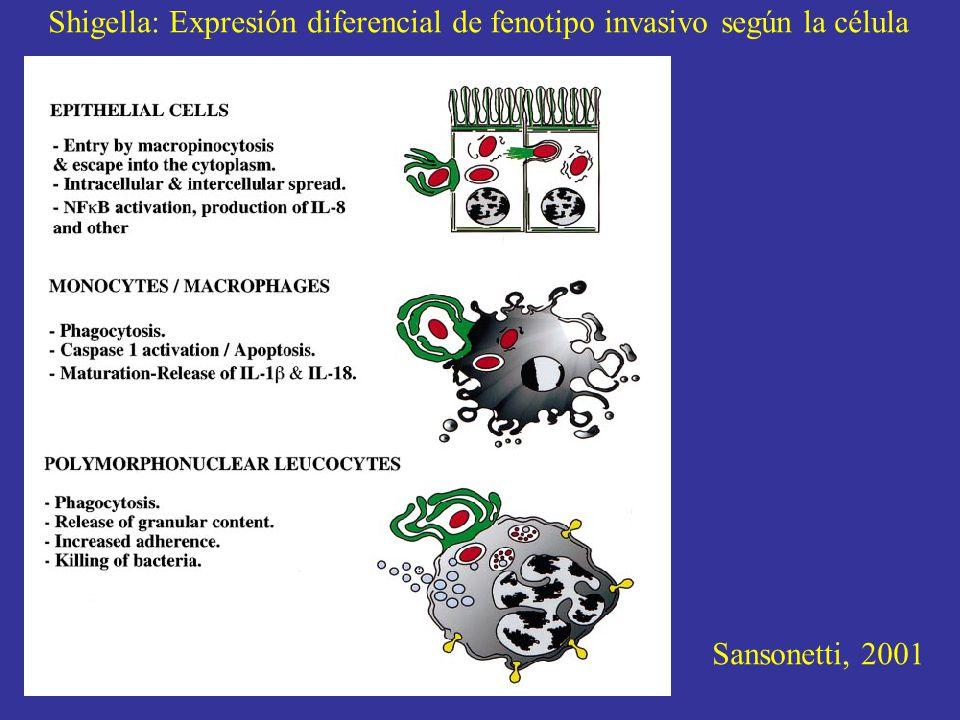 Shigella: Expresión diferencial de fenotipo invasivo según la célula