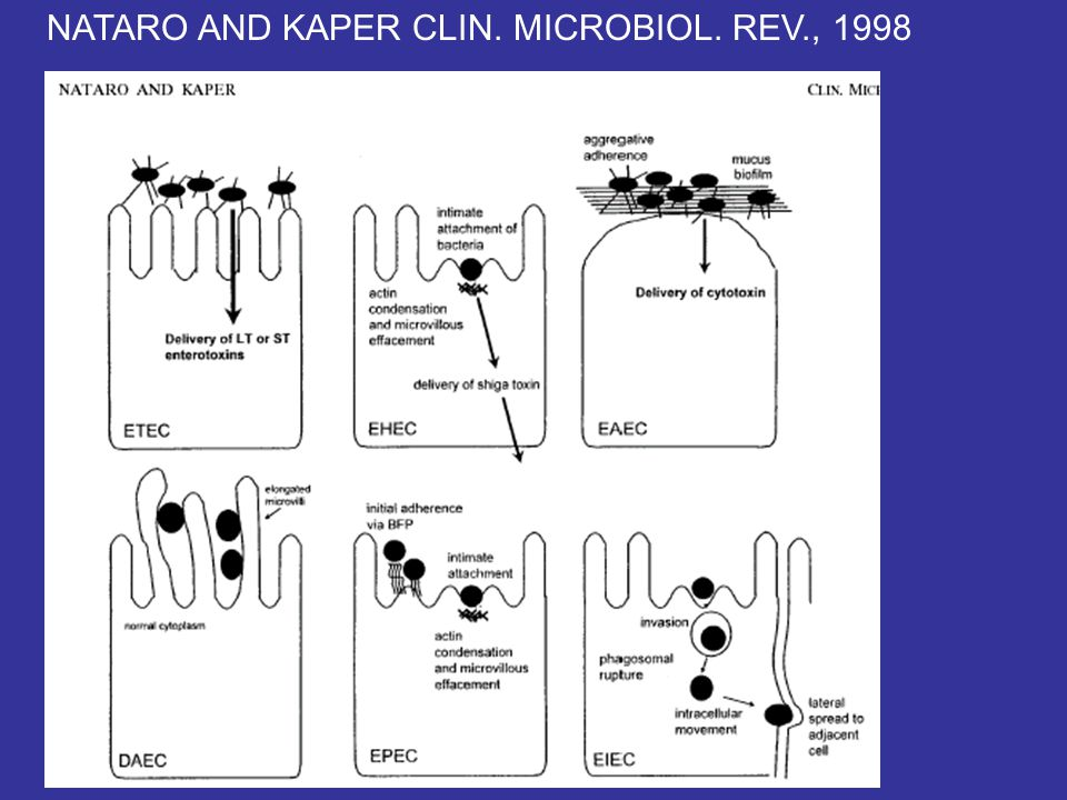 NATARO AND KAPER CLIN. MICROBIOL. REV., 1998