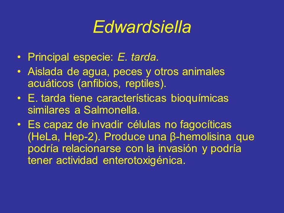 Edwardsiella Principal especie: E. tarda.