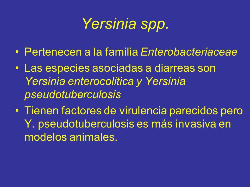 Yersinia spp. Pertenecen a la familia Enterobacteriaceae