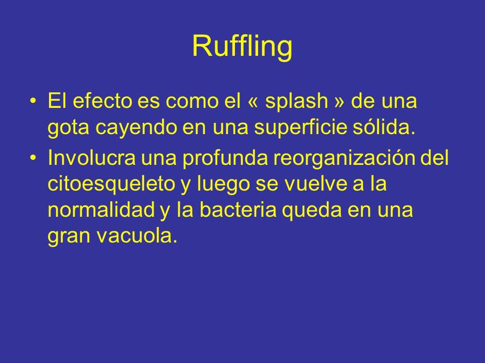 Ruffling El efecto es como el « splash » de una gota cayendo en una superficie sólida.