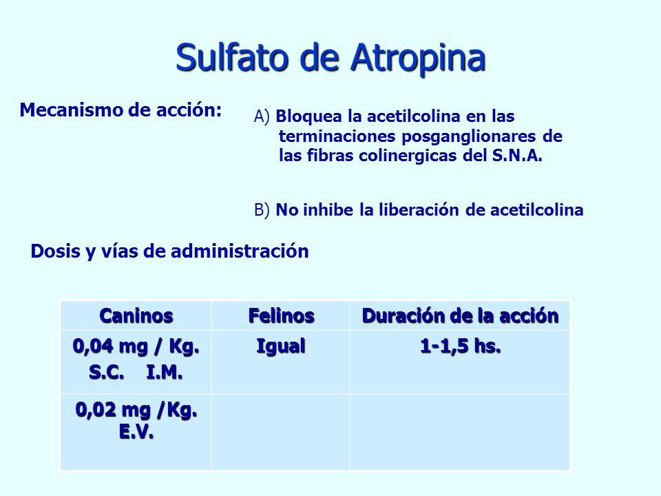Sulfato de Atropina Mecanismo de acción: