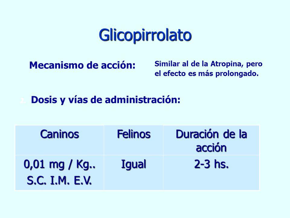 Glicopirrolato Caninos Felinos Duración de la acción 0,01 mg / Kg..