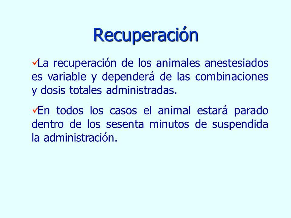 Recuperación La recuperación de los animales anestesiados es variable y dependerá de las combinaciones y dosis totales administradas.
