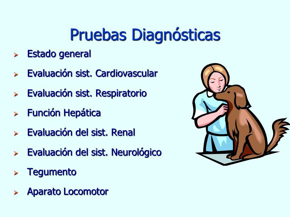 Pruebas Diagnósticas Estado general Evaluación sist. Cardiovascular