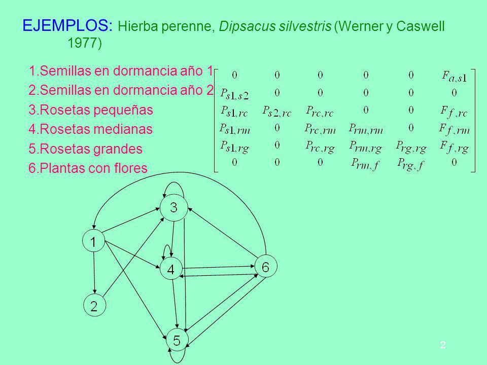 EJEMPLOS: Hierba perenne, Dipsacus silvestris (Werner y Caswell 1977)
