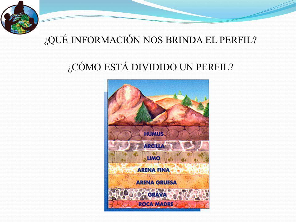 ¿QUÉ INFORMACIÓN NOS BRINDA EL PERFIL