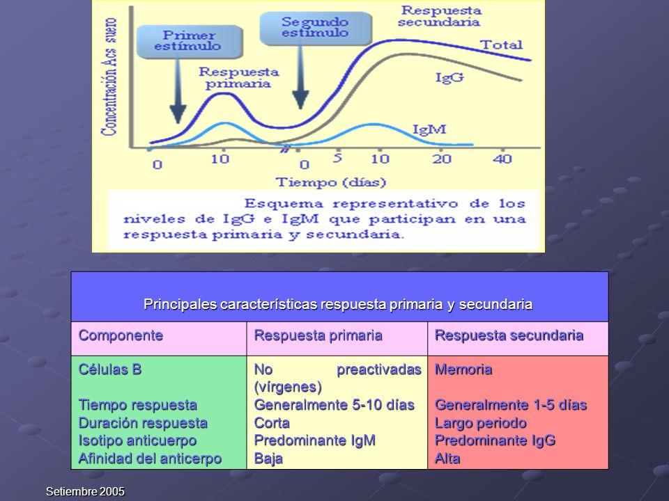 Principales características respuesta primaria y secundaria