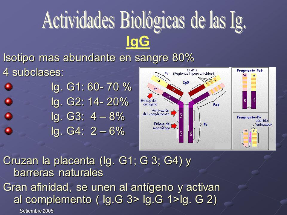 Actividades Biológicas de las Ig.
